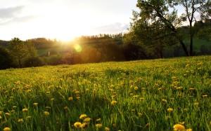 lovely-meadow-wallpaper-1